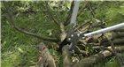 Coupe branches à enclume 80 cm