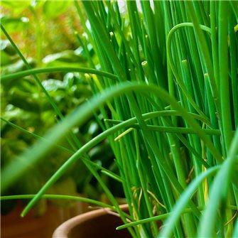 Comment multiplier vos plantes aromatiques ?